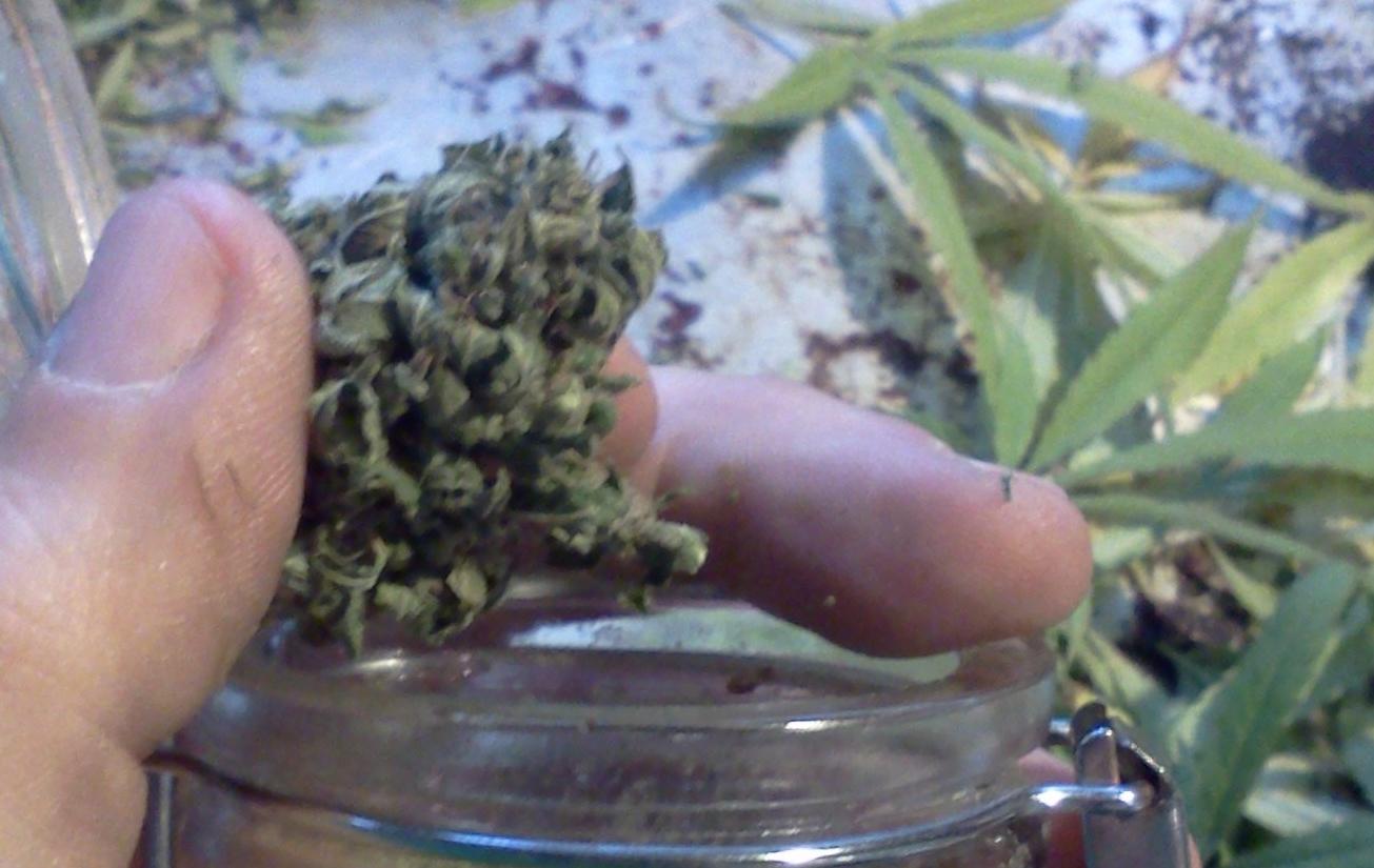 A Medical Marijuana Mormon